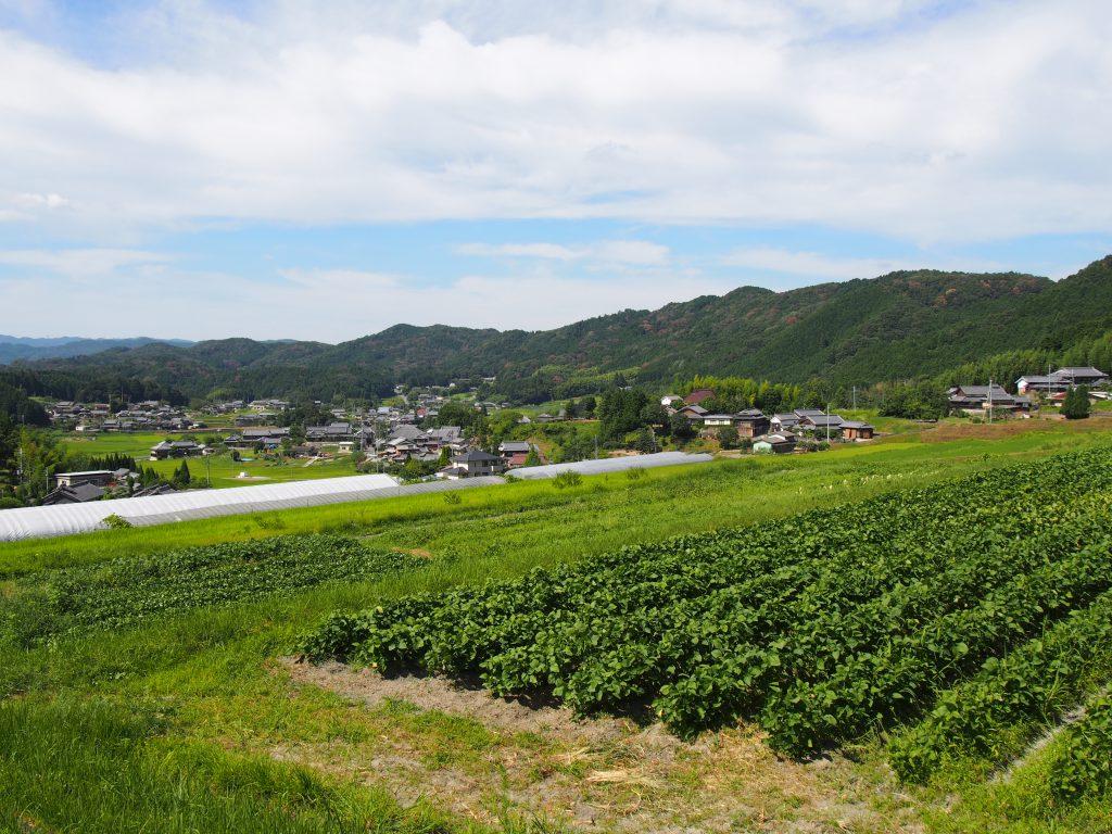 阪原集落を眺める