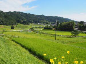 【柳生街道】佇むだけで気持ちの良い「阪原の里」の風景をまとめてみました【農村】