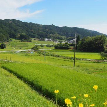 【阪原の農村風景】柳生街道沿いの農村集落一帯は佇んでいるだけでも気持ちの良い風景が広がる