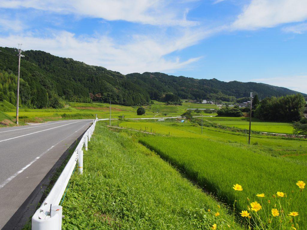 国道369号線沿いの田園風景