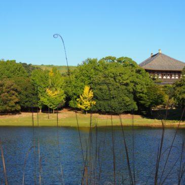 【わかりやすく】奈良・東大寺の創建の由来と歴史【焼失と再建の連続】