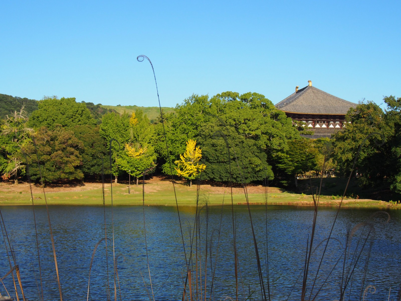 大仏池から大仏殿方面を望む風景