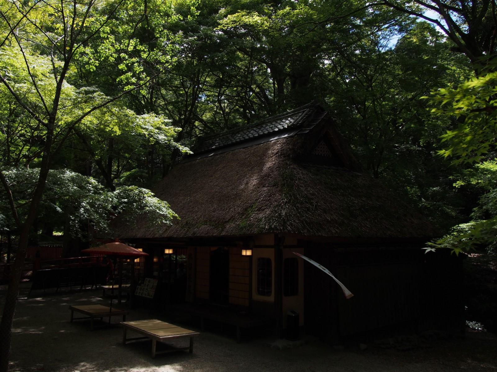 緑に包まれ昼間でも薄暗い「水谷茶屋」