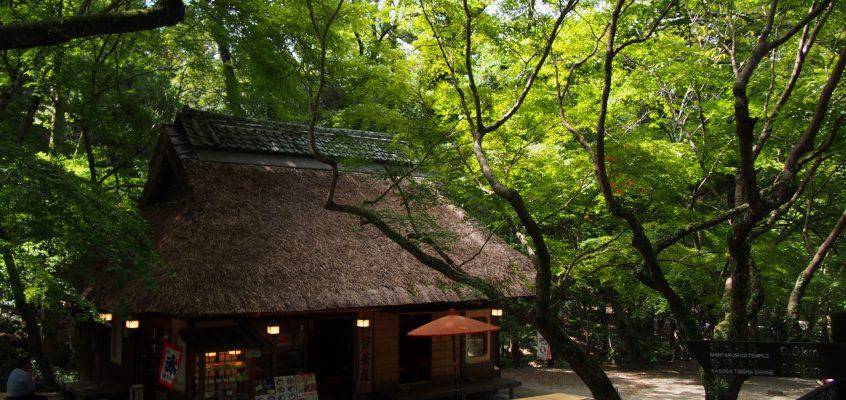 【奈良公園】紅葉と新緑が美しい「水谷茶屋」ってどんなところ?季節の風景を写真でご紹介!
