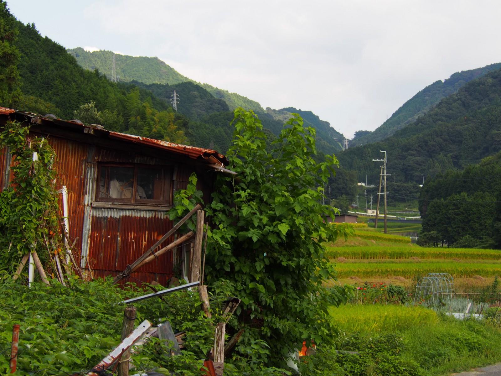 奈良・米谷町の棚田周辺