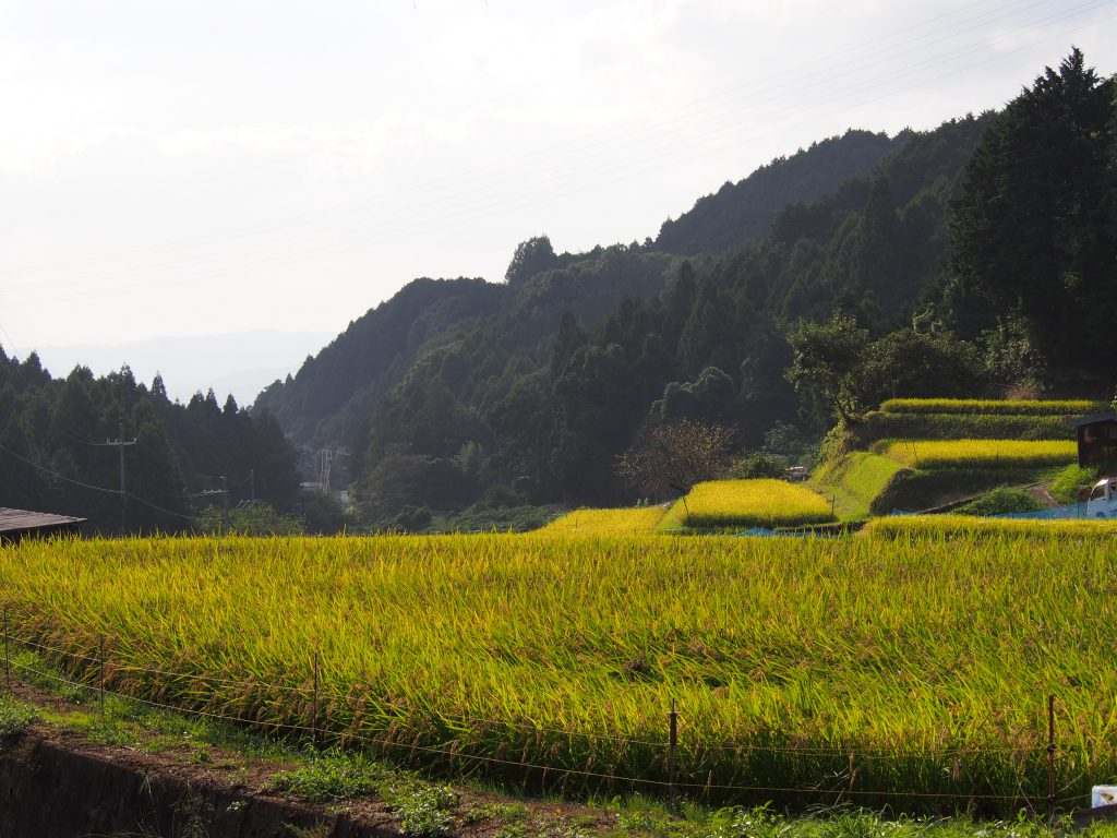 米谷町の田園風景(棚田)
