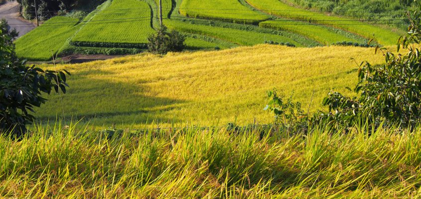 【中畑町の棚田】名阪国道「オメガカーブ」沿いに広がる美しい田園風景