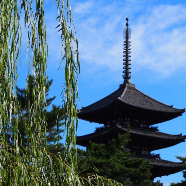 猿沢池のほとりの「柳」と興福寺五重塔