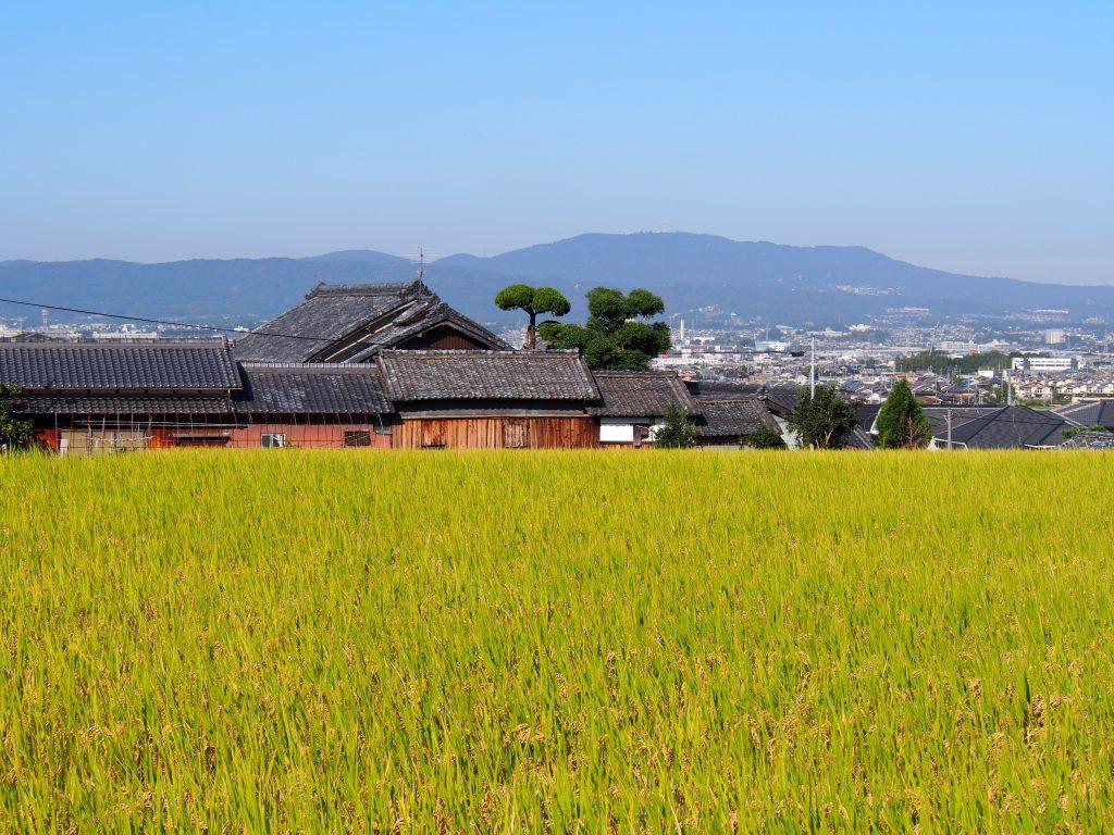 【山辺の道】これぞ奈良。と言いたくなる風景「藤原町・八島町の田園風景」を写真でご紹介!