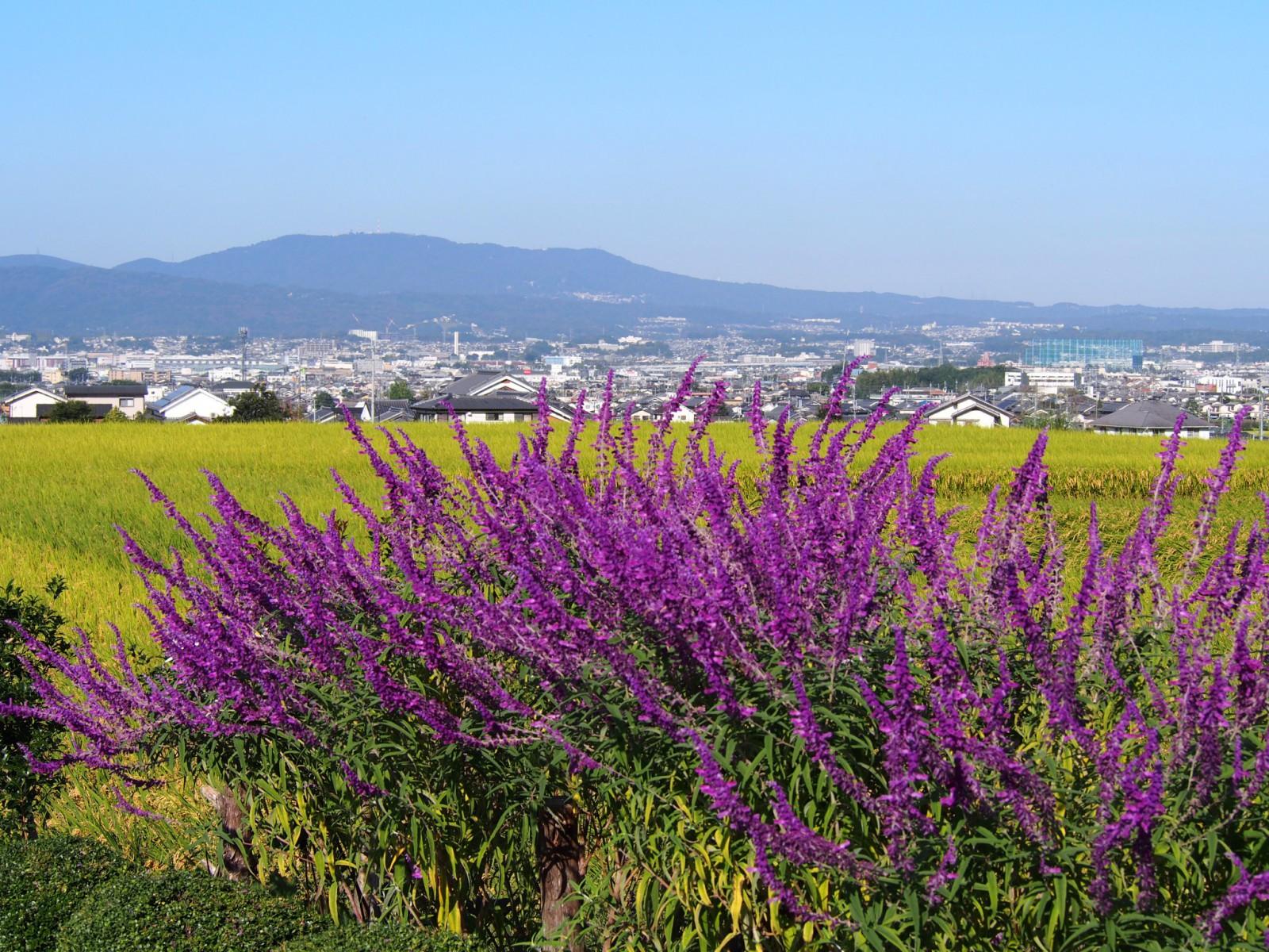 10月上旬の「山辺の道」の風景(奈良市八島町)