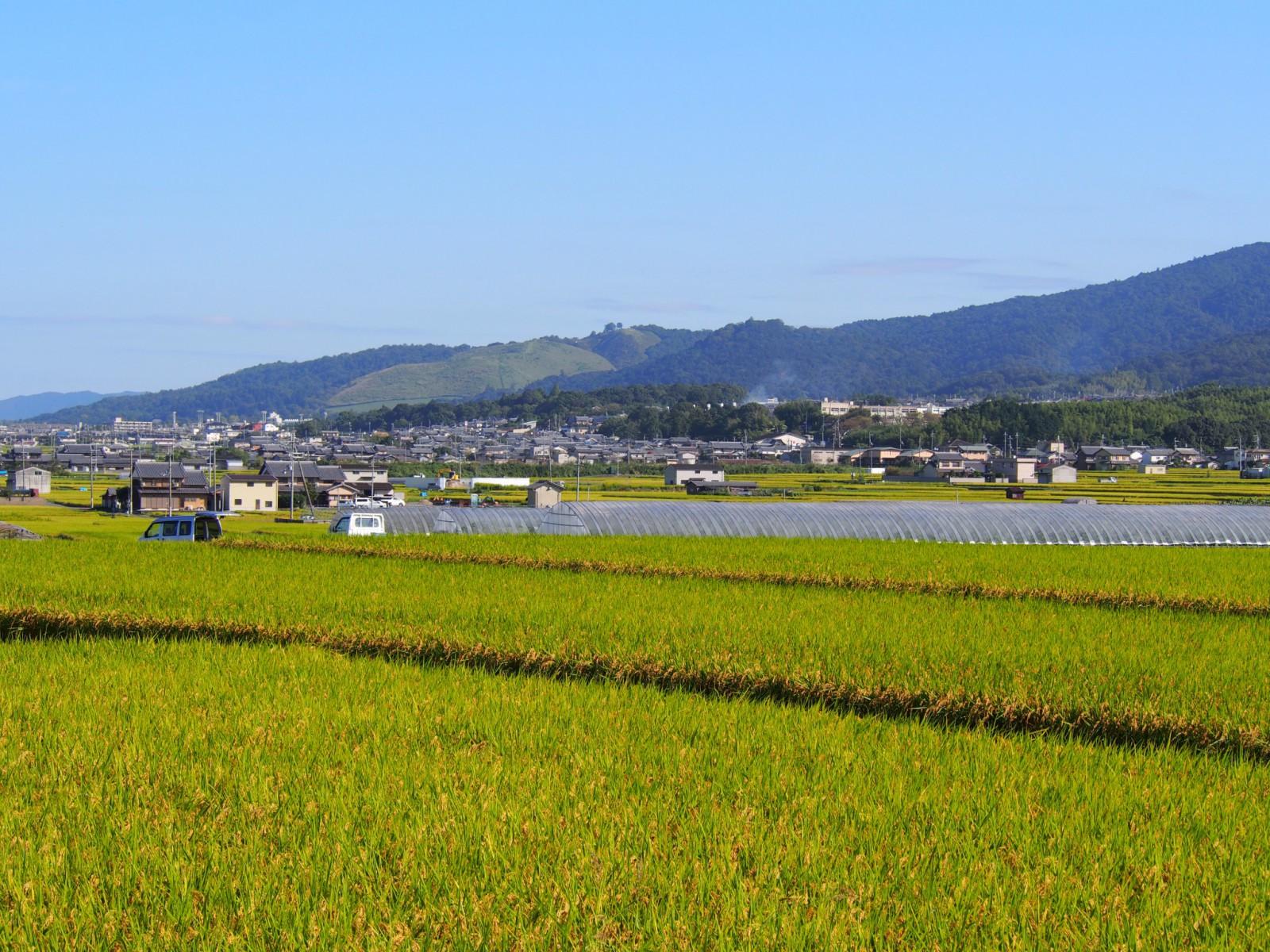 山村町バス停付近の稲刈りシーズンの風景