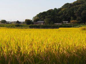 【尼ヶ辻】唐招提寺近くののどかな空間「垂仁天皇陵周辺の田園風景」の魅力を解説!