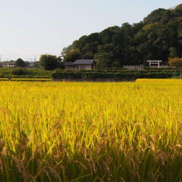 【垂仁天皇陵周辺の田園風景】唐招提寺近くののどかな空間では「かかし」も楽しめる