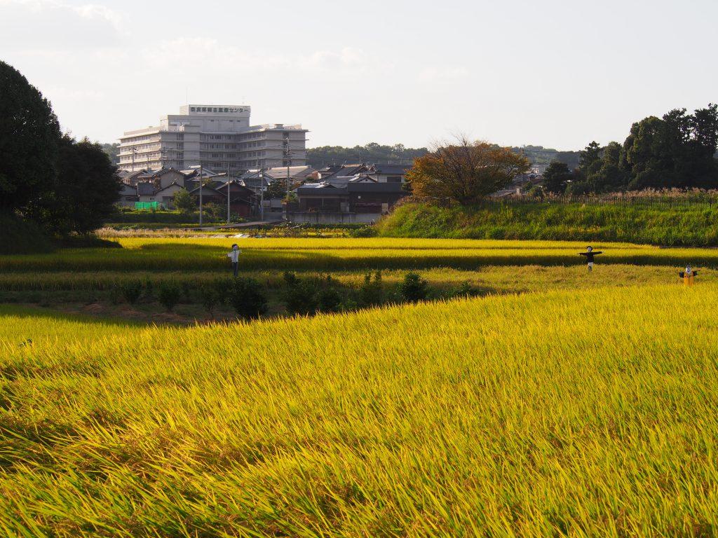 田園風景と奈良県総合医療センター