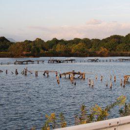 水上池(奈良市)