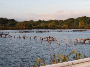 【奈良・佐紀路】平城宮跡にも近い野鳥の楽園「水上池」ってどんなところ?美しい風景を写真でご紹介!