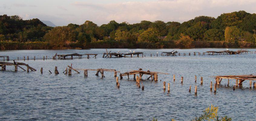 【水上池】平城宮跡にも近い野鳥の楽園は平城遷都前に設けられた「ため池」