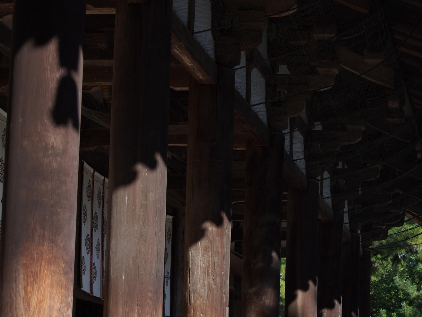 唐招提寺金堂の柱
