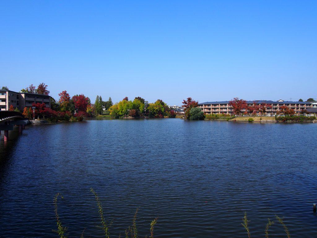【遊園地跡】季節折々の風景が美しい「菖蒲池(菖蒲上池)」ってどんなところ?【駅前すぐ】
