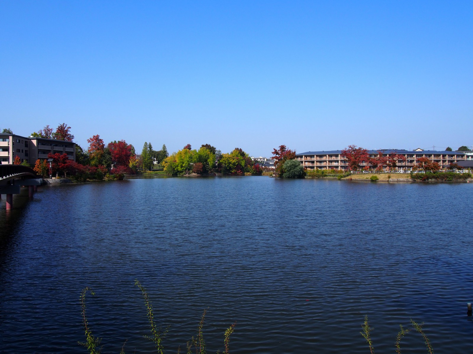 菖蒲池(菖蒲上池)