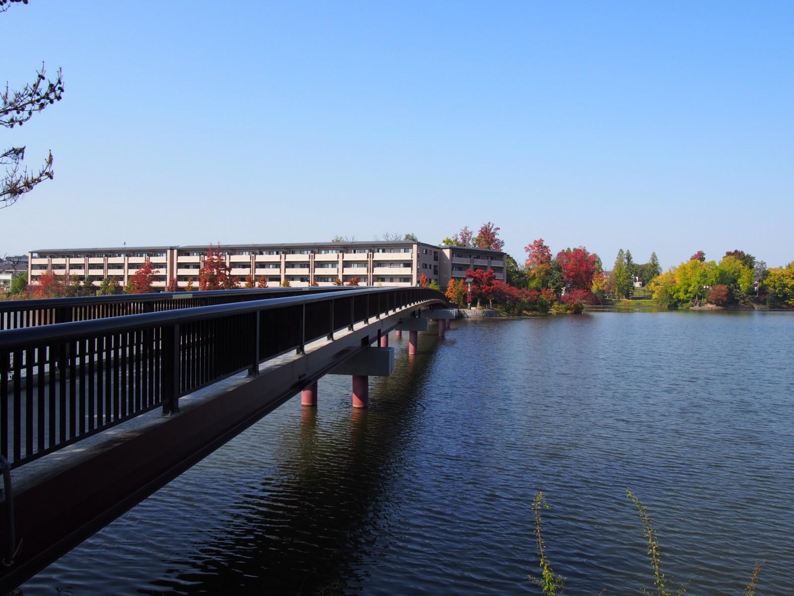 高級住宅街・マンションに囲まれた菖蒲池