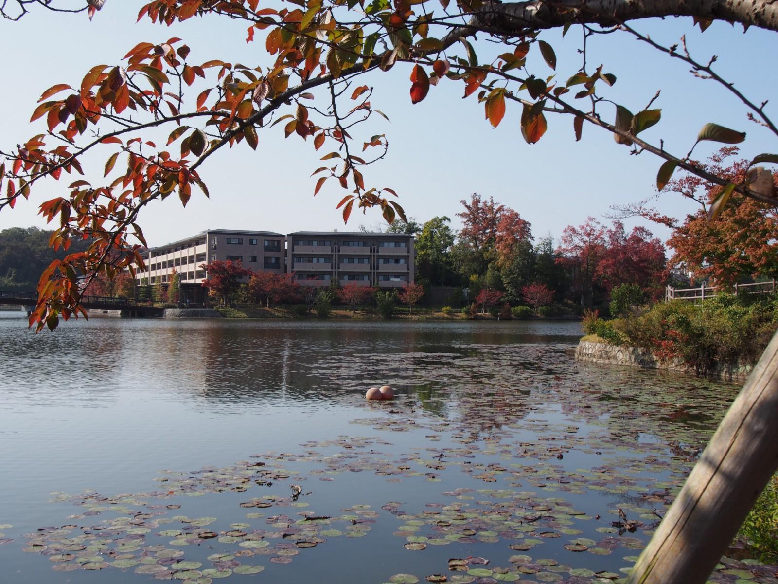 秋の菖蒲池