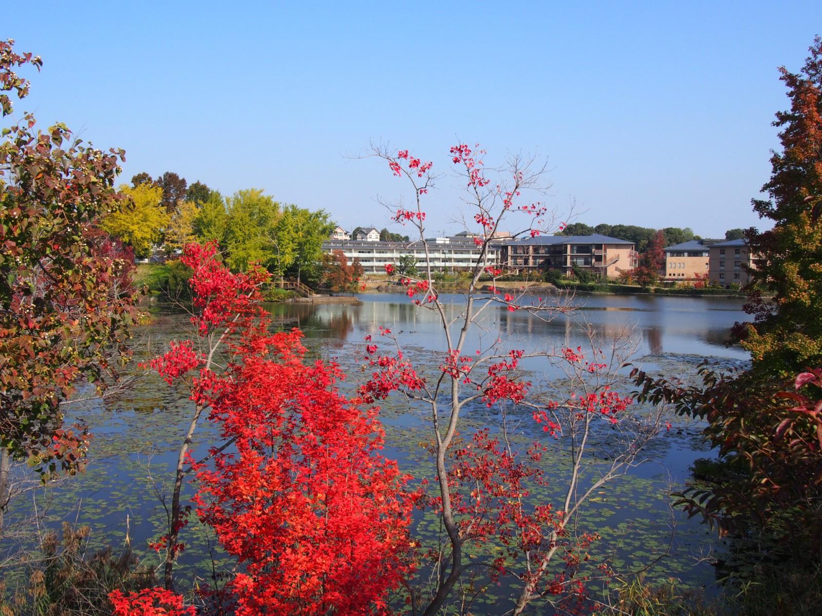 紅葉が美しい菖蒲池のほとり