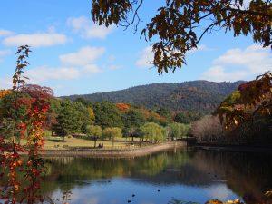 【奈良公園】眺めの良い広々とした鹿の楽園「荒池(荒池園地)」ってどんなところ?みどころを写真でご紹介
