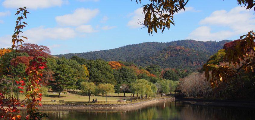 【荒池園地】眺めの良い広々とした水辺は「鹿の楽園」
