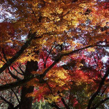 奈良市内の「紅葉の名所・みどころ」一覧