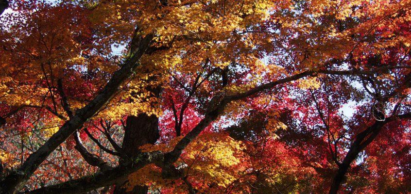 【観光】奈良市内の「紅葉の名所」まとめ(奈良公園・平城宮跡・正暦寺など)