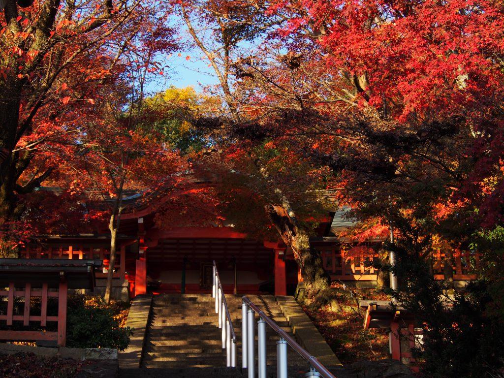瑜伽神社の石段と紅葉