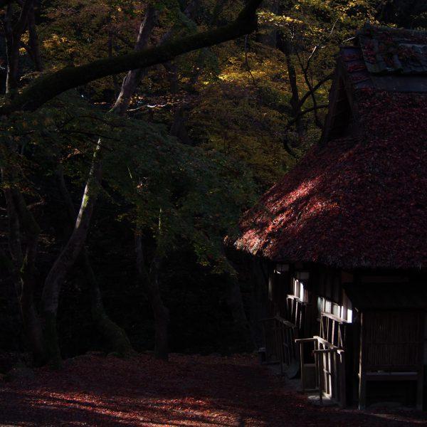 紅葉シーズンの水谷茶屋