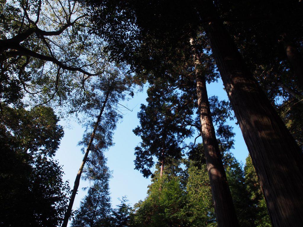 鎮守の森(添御県坐神社)