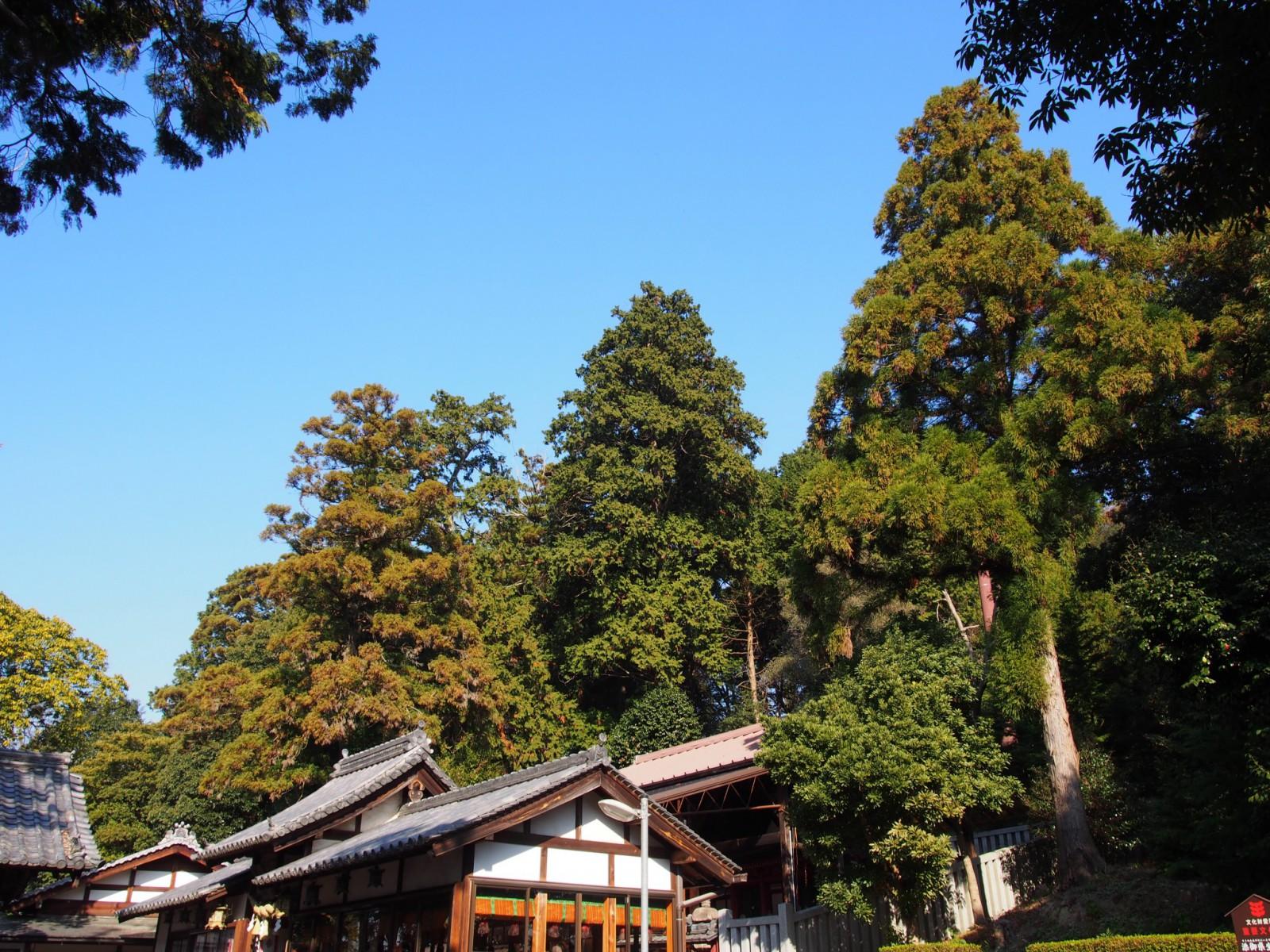 添御県坐神社の社殿