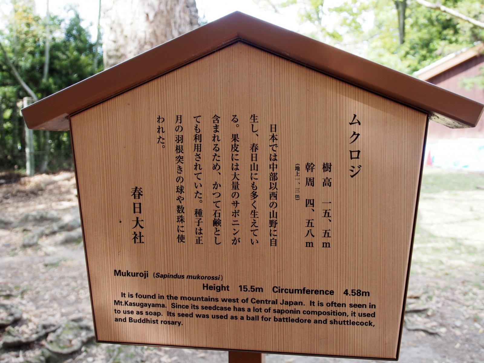 奈良公園内「ムクロジの木」の案内板
