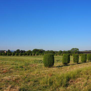 【内裏跡(平城宮跡)】緑の円柱が立ち並ぶエリアはかつての「天皇の住居」