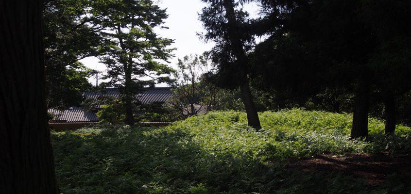 【東大寺西塔跡】世界的観光地の真横に広がる圧倒的な「静寂」
