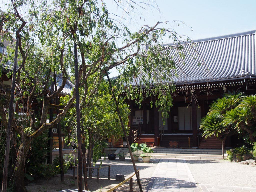 淨教寺本堂とソテツを望む