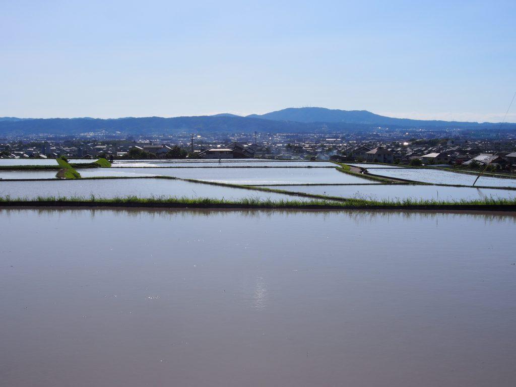 田植え時期の田園風景(奈良市藤原・八島町)