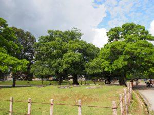【奈良公園】かつて存在した神社の五重塔「春日大社東西塔跡」ってどんなところ?歴史などを詳しく解説!