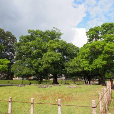 【春日大社東西塔跡】現在の奈良公園内にかつて存在した「神社の五重塔」