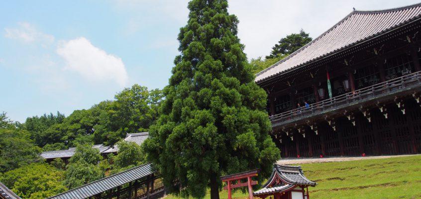 【二月堂良弁杉】東大寺初代別当ゆかりの杉の巨木は二月堂の正面に堂々とそびえ立つ