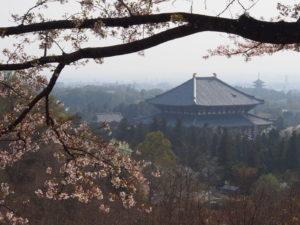 奈良奥山ドライブウェイのご利用方法・ルート・料金は?(若草山・高円山・春日山)