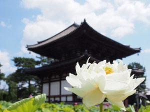【蓮の寺】奈良「喜光寺」の歴史・みどころ・アクセスなどを徹底解説!【写真多数】