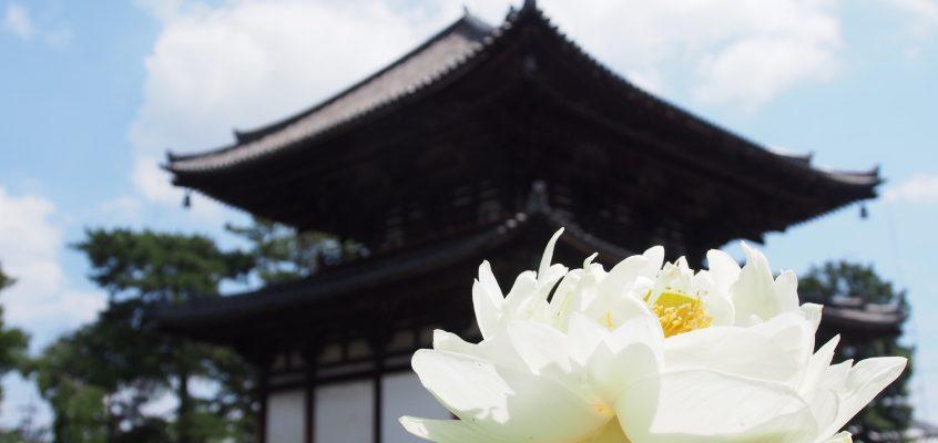 【喜光寺】行基菩薩ゆかりのお寺は美しい「蓮」でも有名