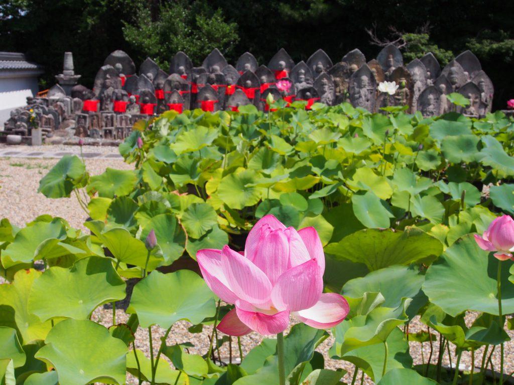 石仏と蓮の花(喜光寺)