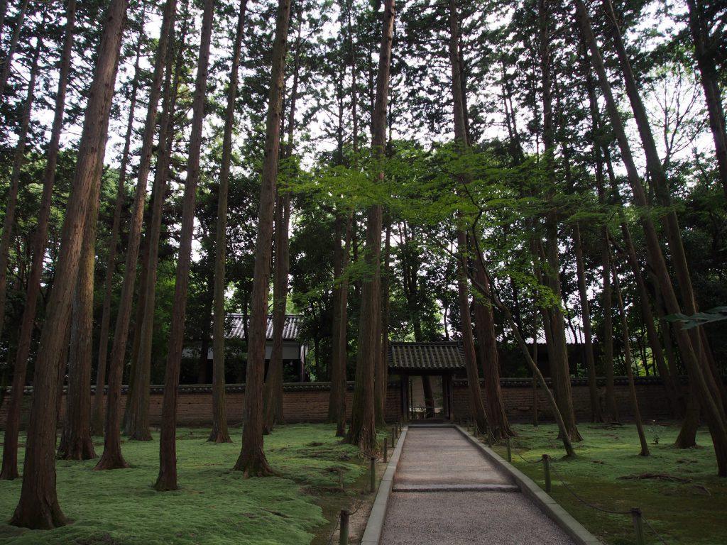 苔むした地面が美しい杉林(唐招提寺)
