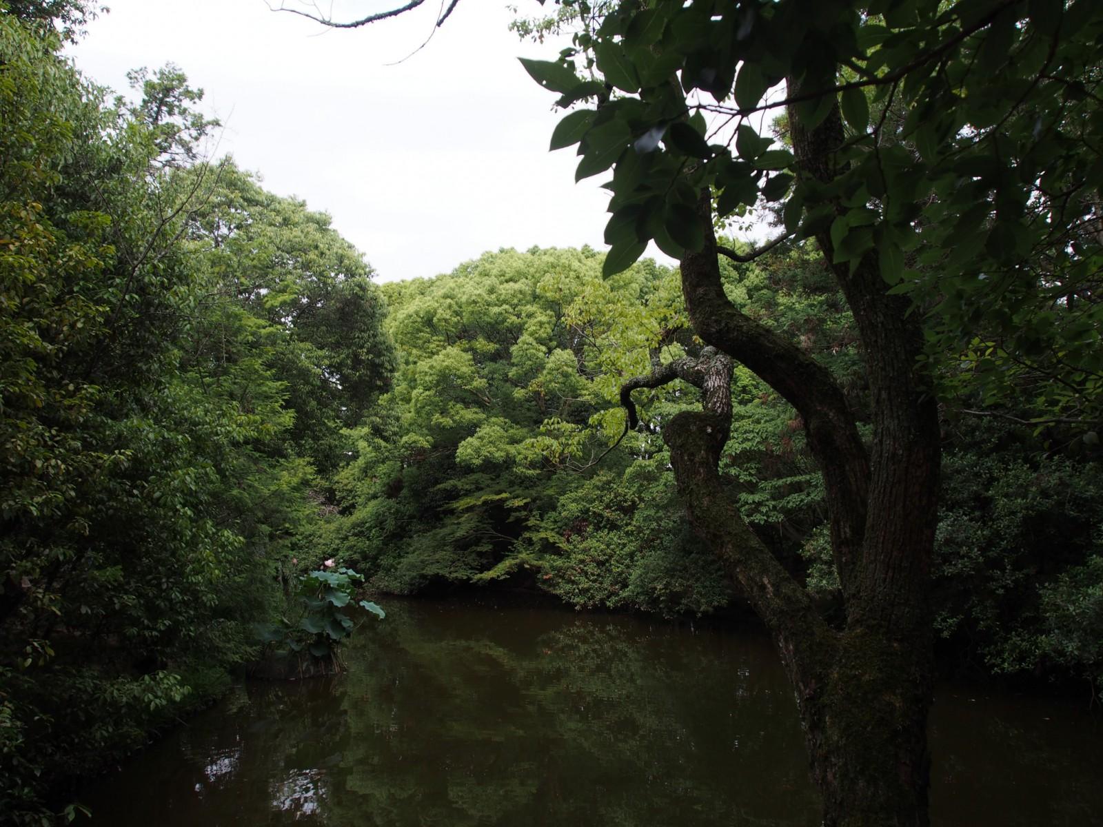唐招提寺境内に広がる「水辺」
