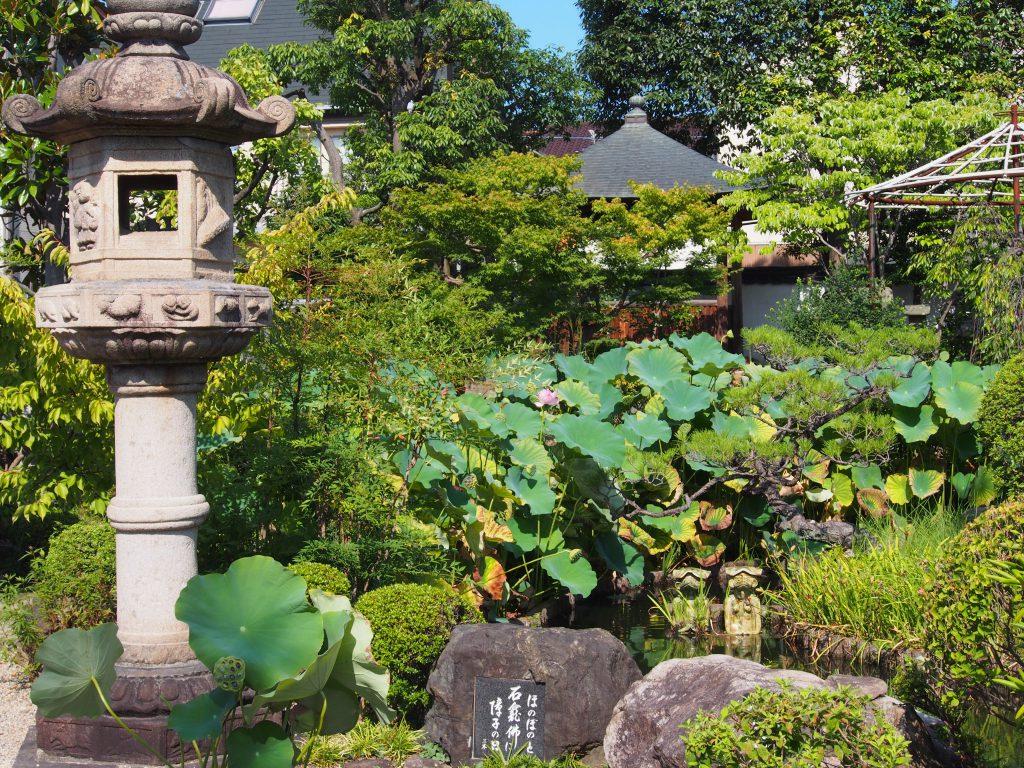 蓮池のある十輪院境内の庭園